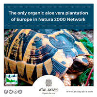 The only organic aloe vera plantation of Europe in Natura 2000 Network